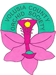 Volusia County Orchid Society, Inc.